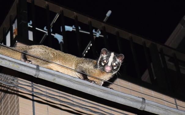 ネズミ・ハクビシンなどの害獣駆除